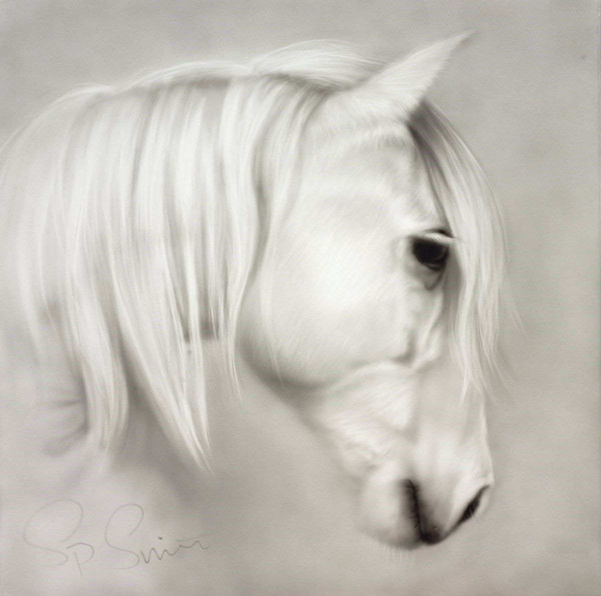 Elegance by Steven Smith -  sized 16x16 inches. Available from Whitewall Galleries